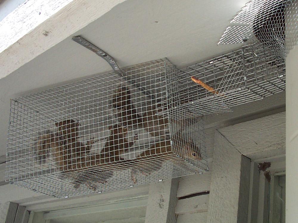 Butler County Animal Control Services